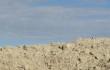 """AGRINSIEME: """"SICCITÀ, SITUAZIONE SEMPRE PIÙ DIFFICILE, MA NON SI PUÒ INTERROMPERE L'EROGAZIONE DI ACQUA ALLE AZIENDE AGRICOLE"""""""