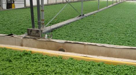 AGRICOLTURA IN EMILIA-ROMAGNA: INCREMENTO DEL BIOLOGICO. SODDISFAZIONE DI AGRINSIEME